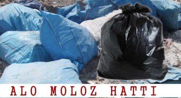 CUVALLI-MOLOZ-ALIMI-1